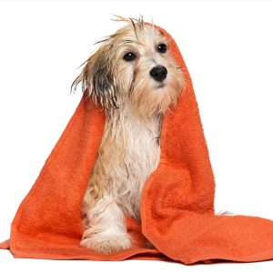 Grooming at Town Dog